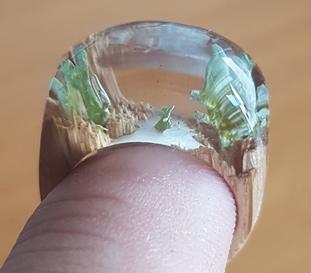 Ring aus Eichenholz mit Moos und SR1670 Gießharz
